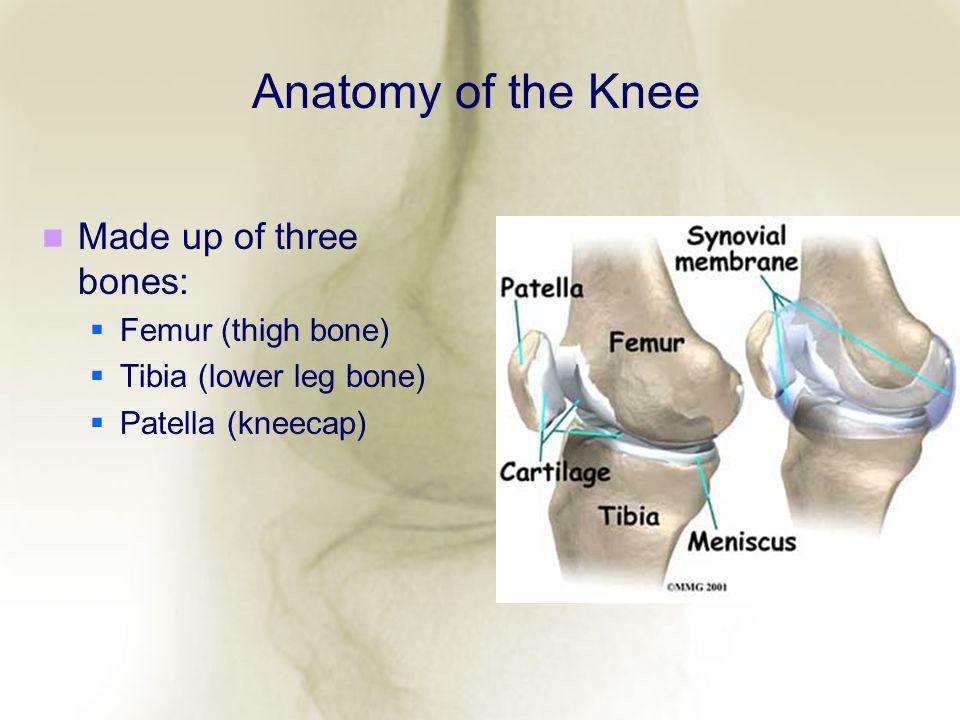Anatomy of the Knee Made up of three bones: Femur (thigh bone)