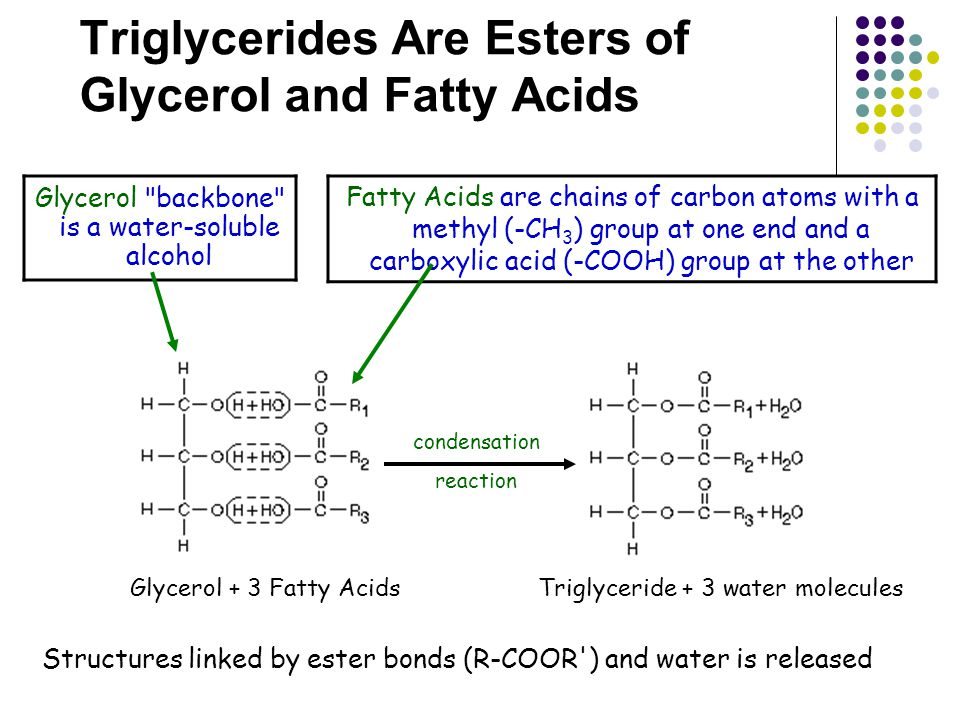 Triglycerides Are Esters of Glycerol and Fatty Acids