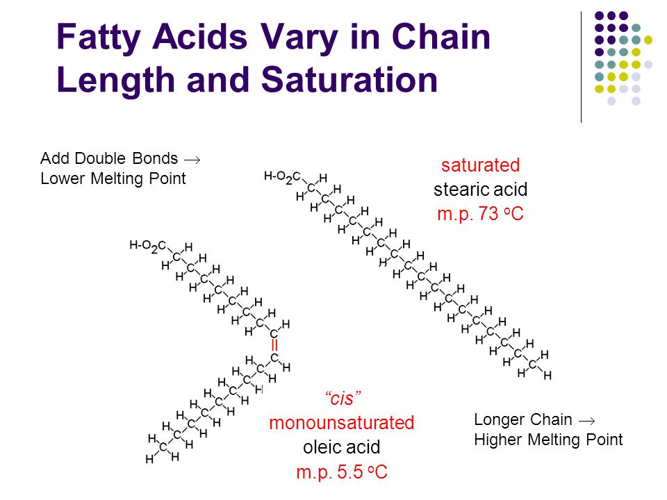 Fatty Acids Vary in Chain Length and Saturation