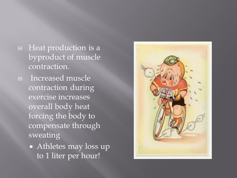 Heat production is a byproduct of muscle contraction.