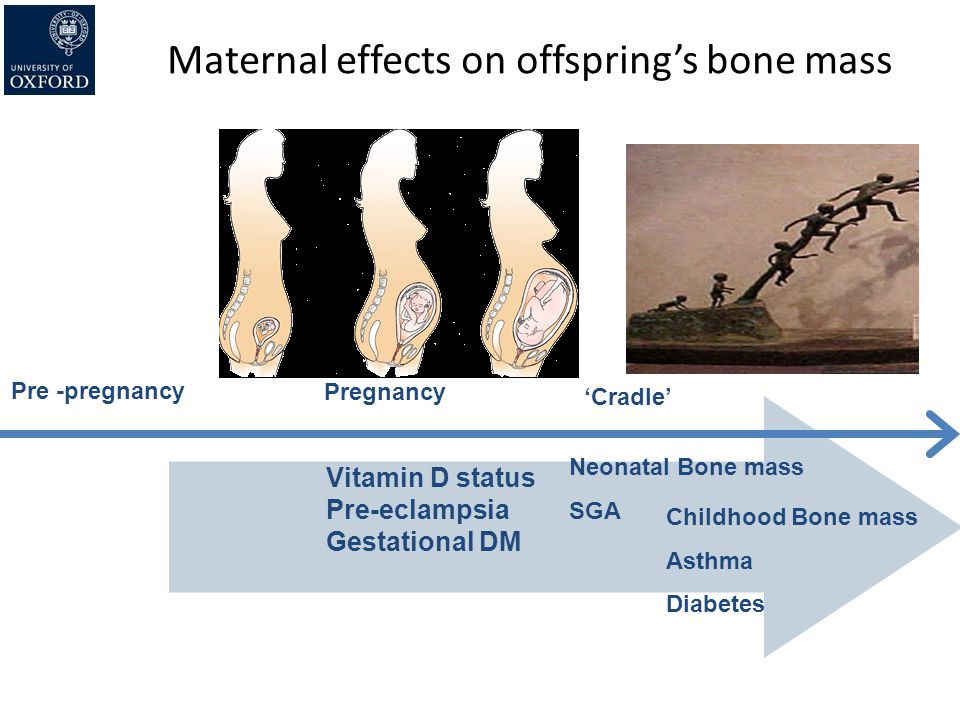 Maternal effects on offspring's bone mass