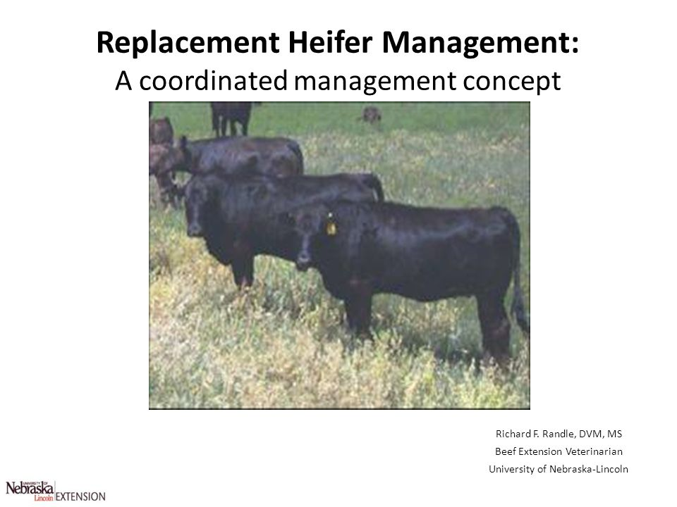 Replacement Heifer Management: A coordinated management concept
