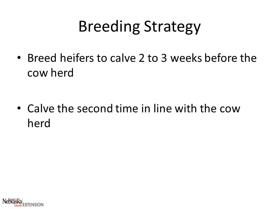 Breeding Strategy Breed heifers to calve 2 to 3 weeks before the cow herd.