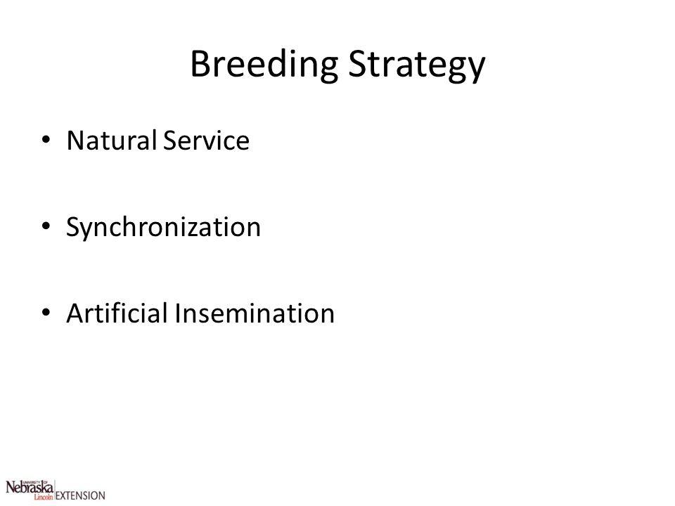 Breeding Strategy Natural Service Synchronization