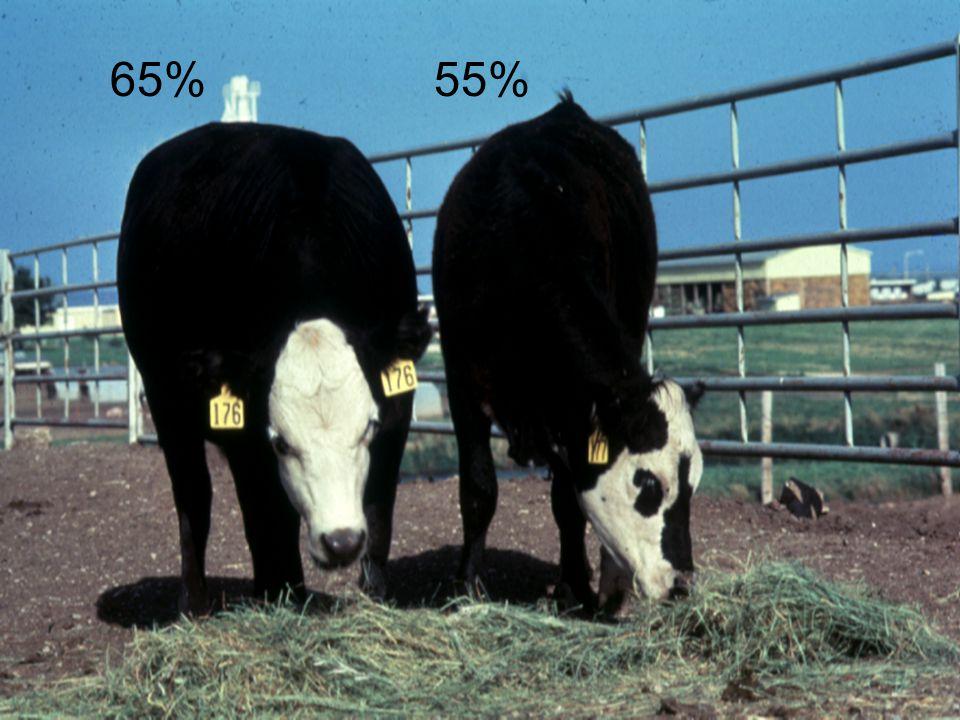 65% 55%