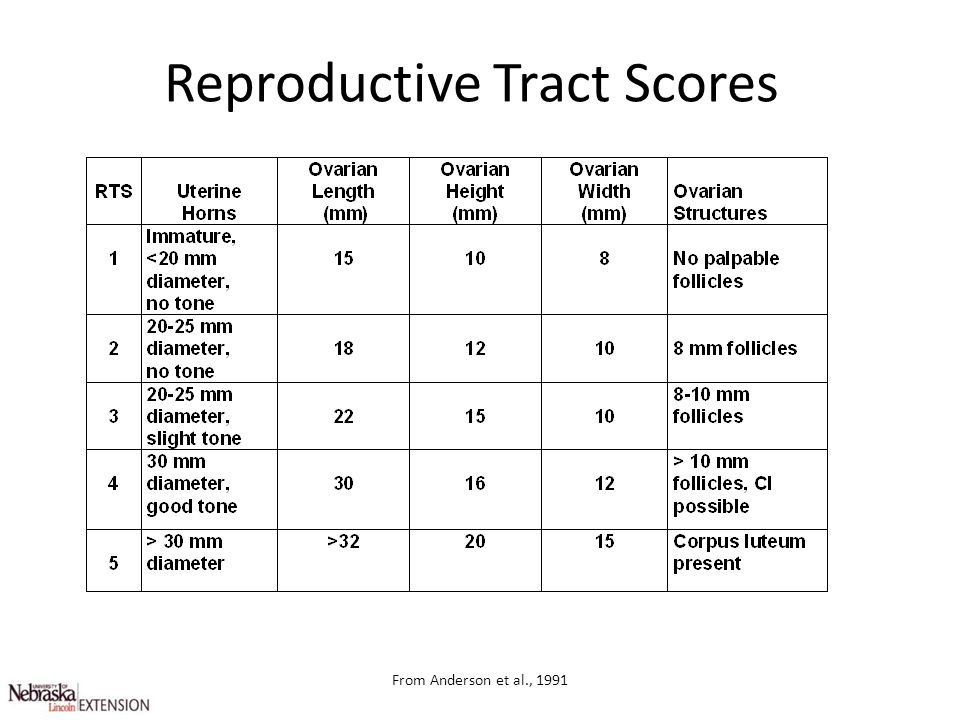 Reproductive Tract Scores