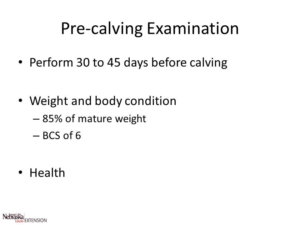 Pre-calving Examination