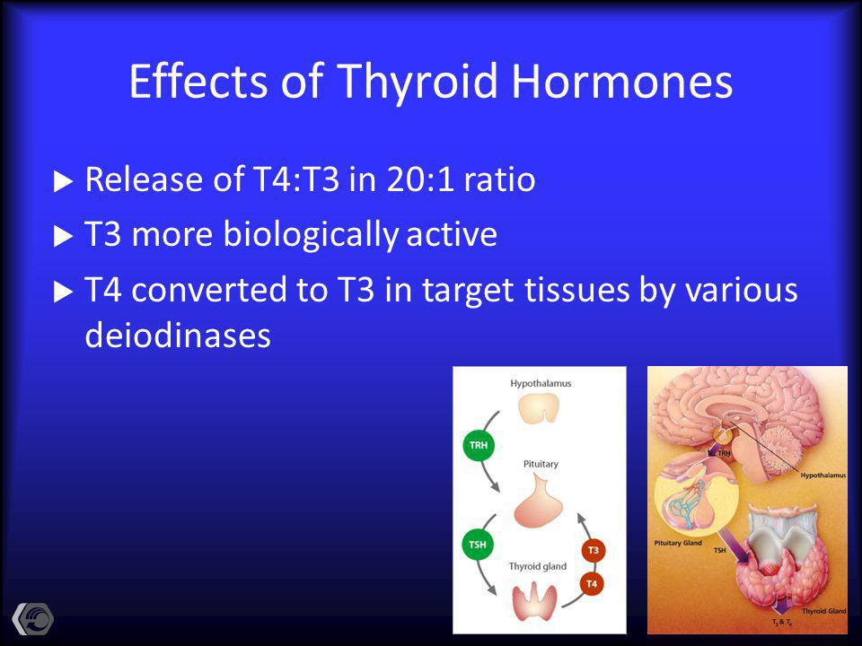 Effects of Thyroid Hormones