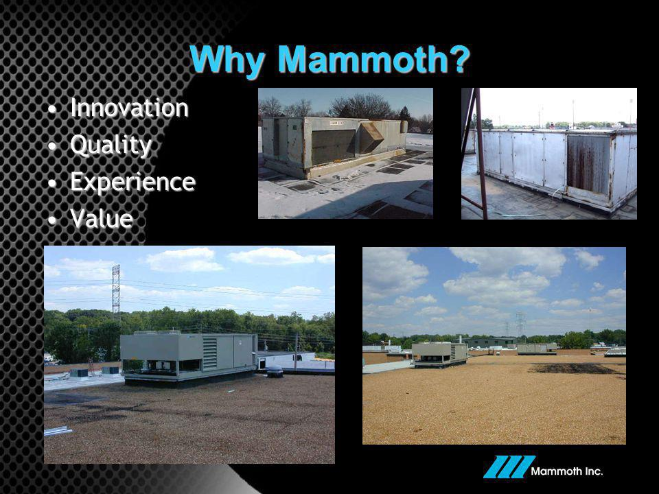 Why Mammoth Innovation Quality Experience Value