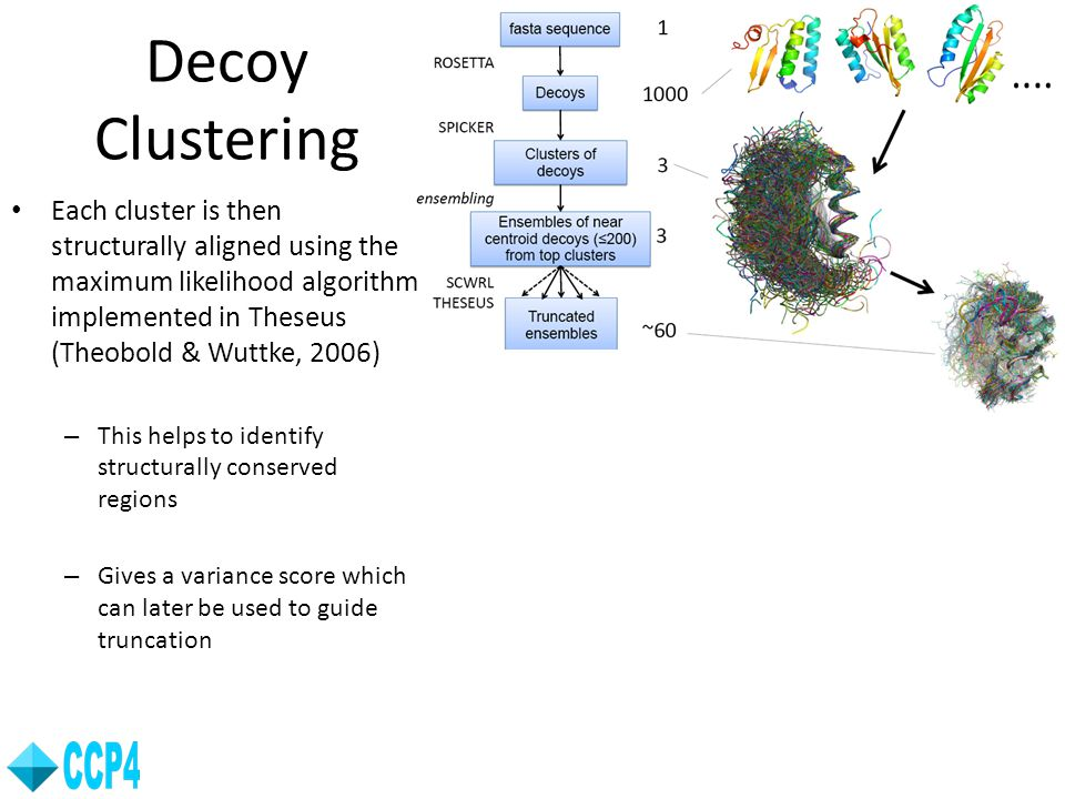 Decoy Clustering Each cluster is then structurally aligned using the maximum likelihood algorithm implemented in Theseus (Theobold & Wuttke, 2006)