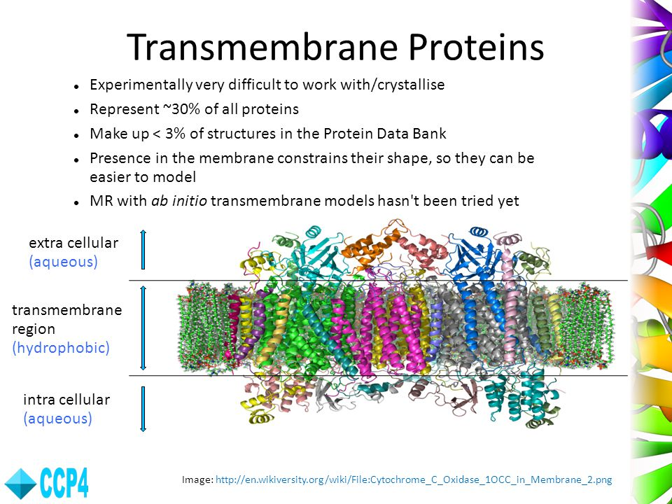 Transmembrane Proteins
