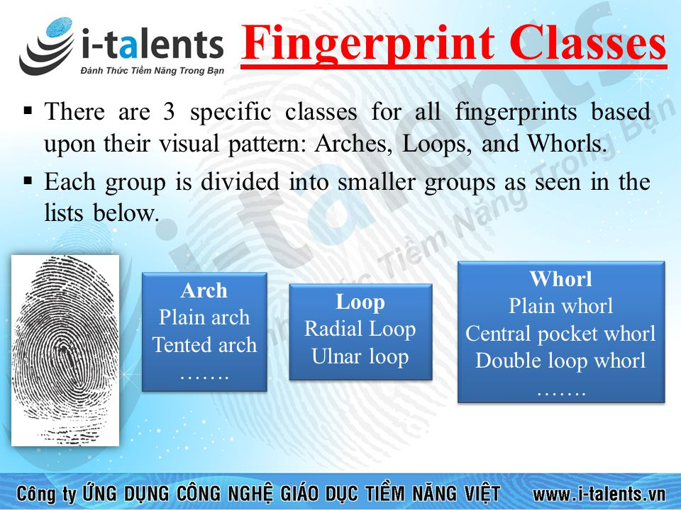Fingerprint Classes There are 3 specific classes for all fingerprints based upon their visual pattern: Arches, Loops, and Whorls.