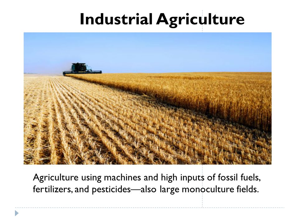 Industrial Agriculture