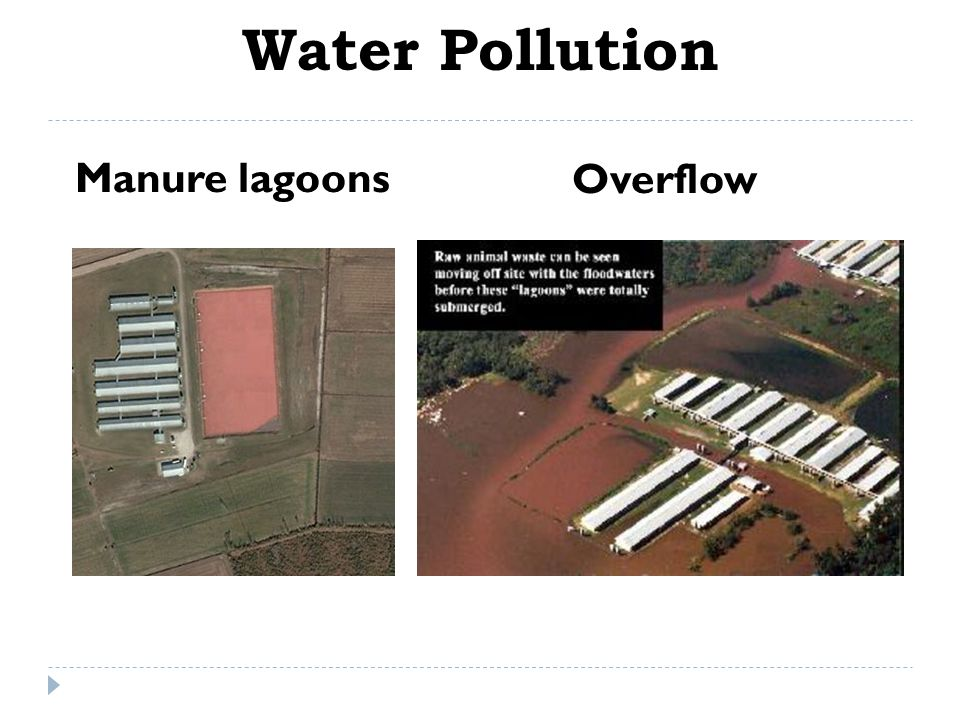 Water Pollution Manure lagoons Overflow