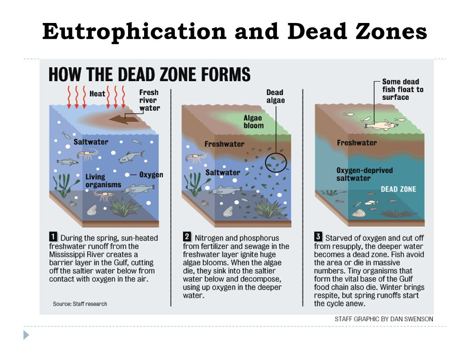 Eutrophication and Dead Zones