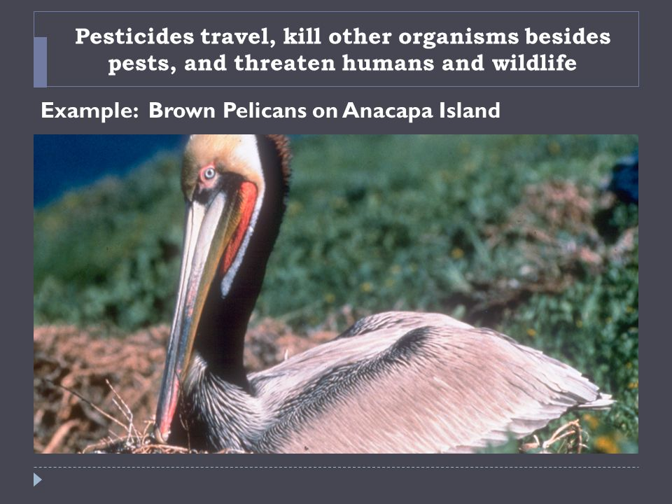 Pesticides travel, kill other organisms besides pests, and threaten humans and wildlife