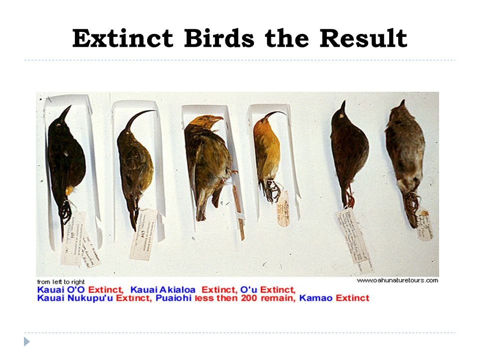 Extinct Birds the Result