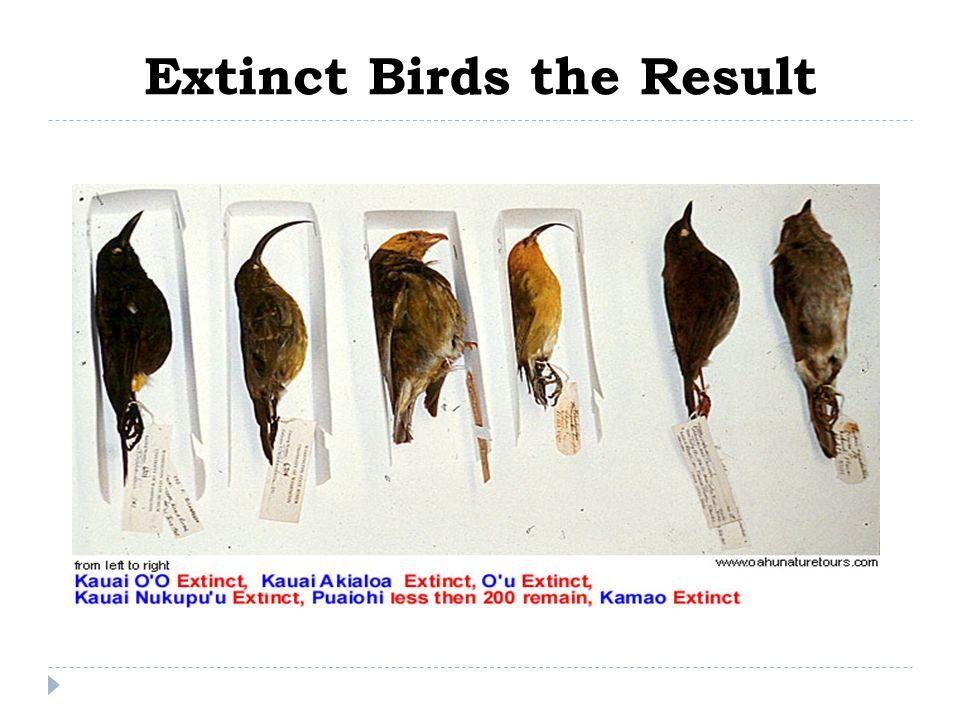 Extinct Birds the Result