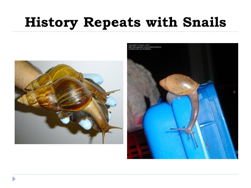 History Repeats with Snails
