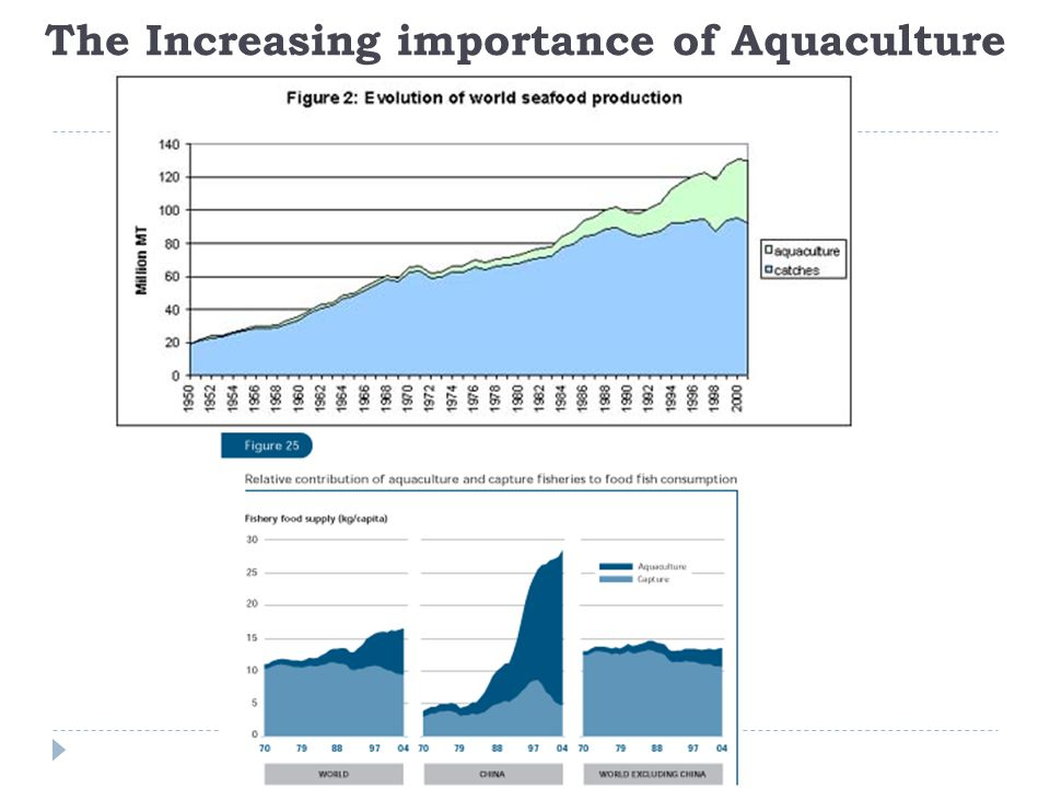 The Increasing importance of Aquaculture