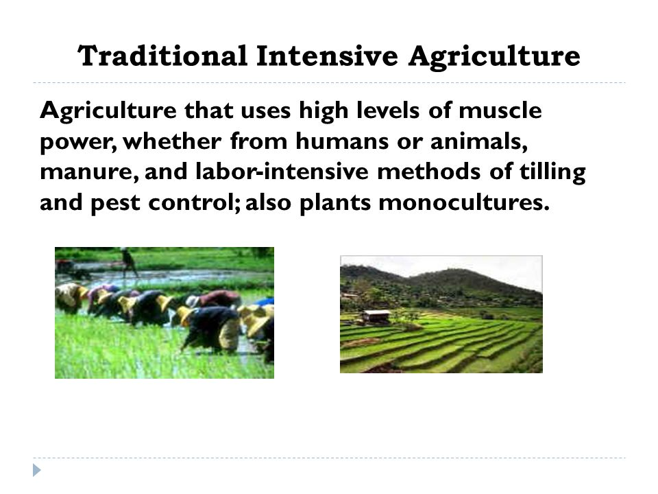 Traditional Intensive Agriculture