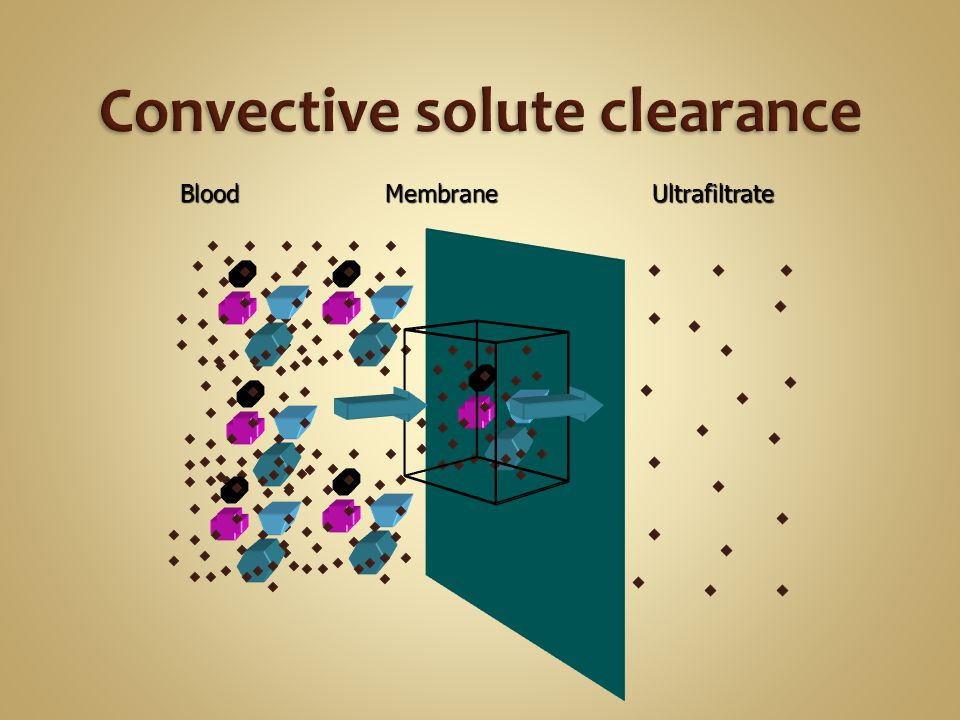 Convective solute clearance