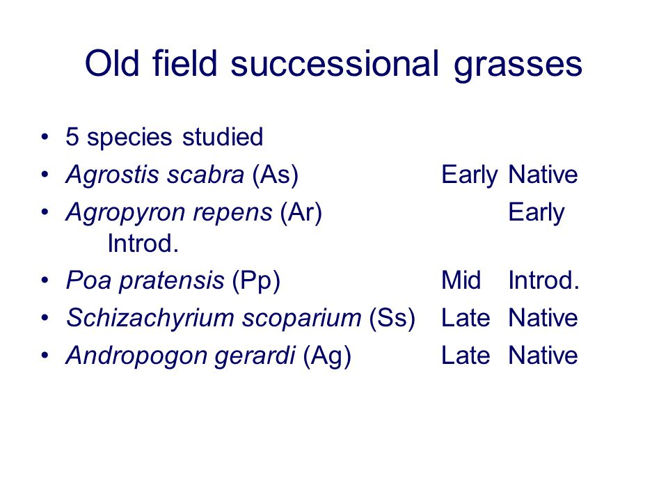Old field successional grasses