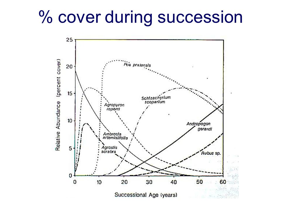 % cover during succession