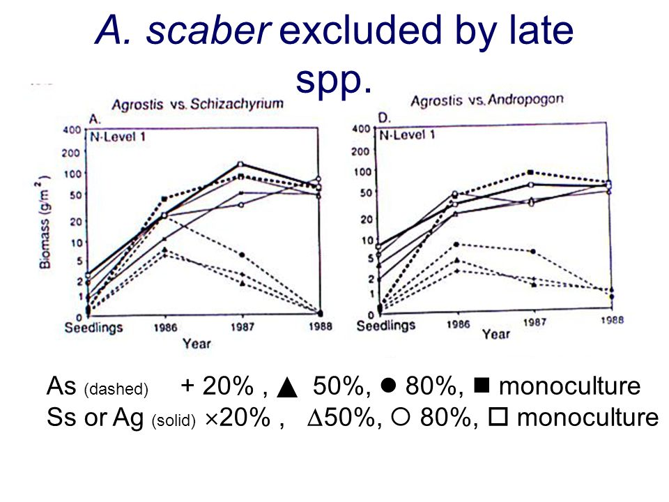 A. scaber excluded by late spp.
