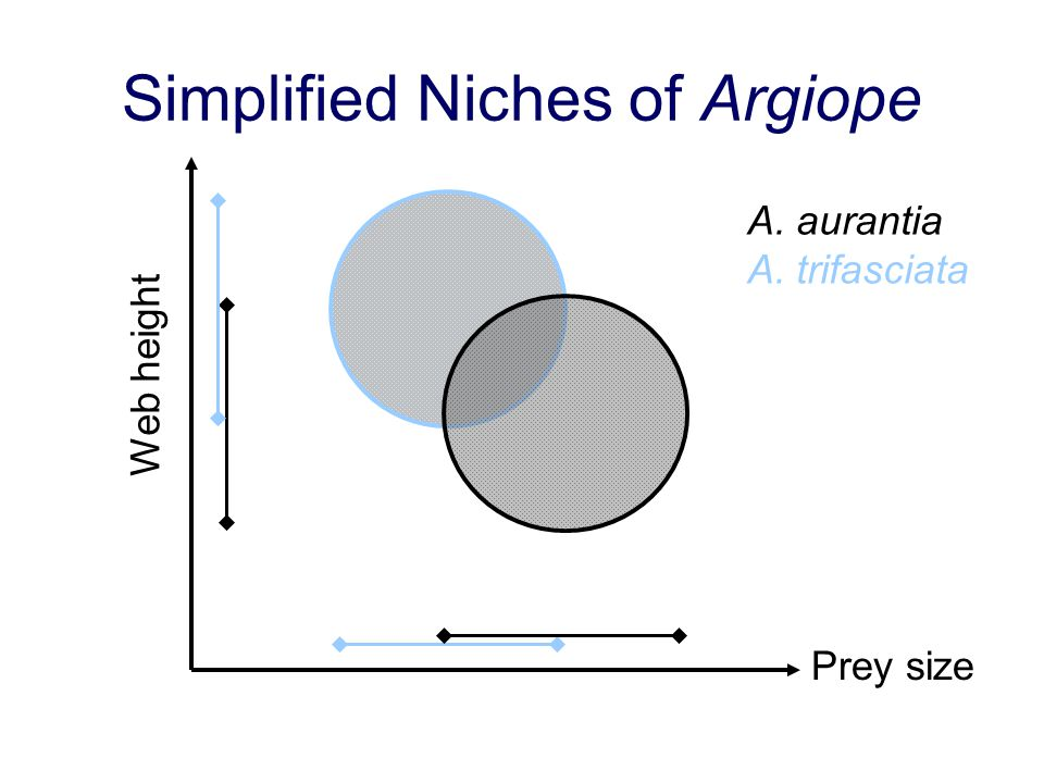 Simplified Niches of Argiope