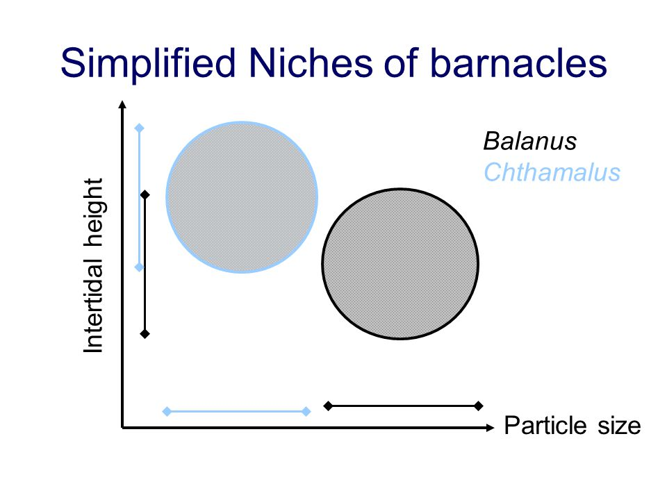 Simplified Niches of barnacles