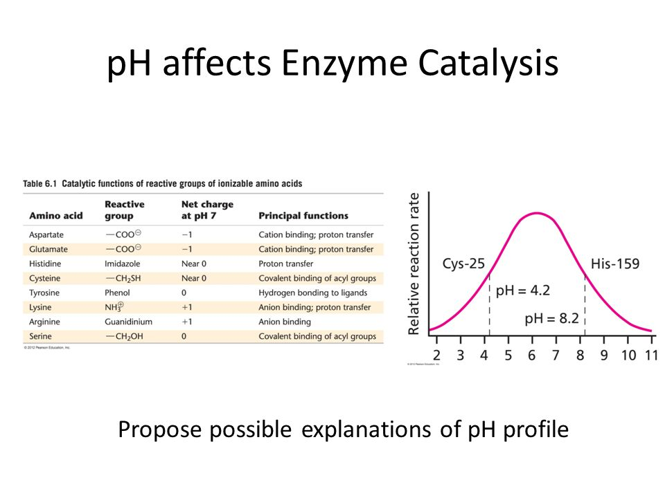 pH affects Enzyme Catalysis