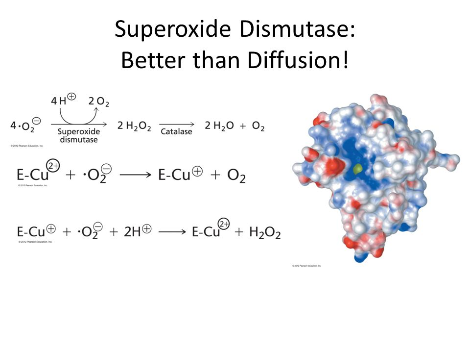 Superoxide Dismutase: Better than Diffusion!