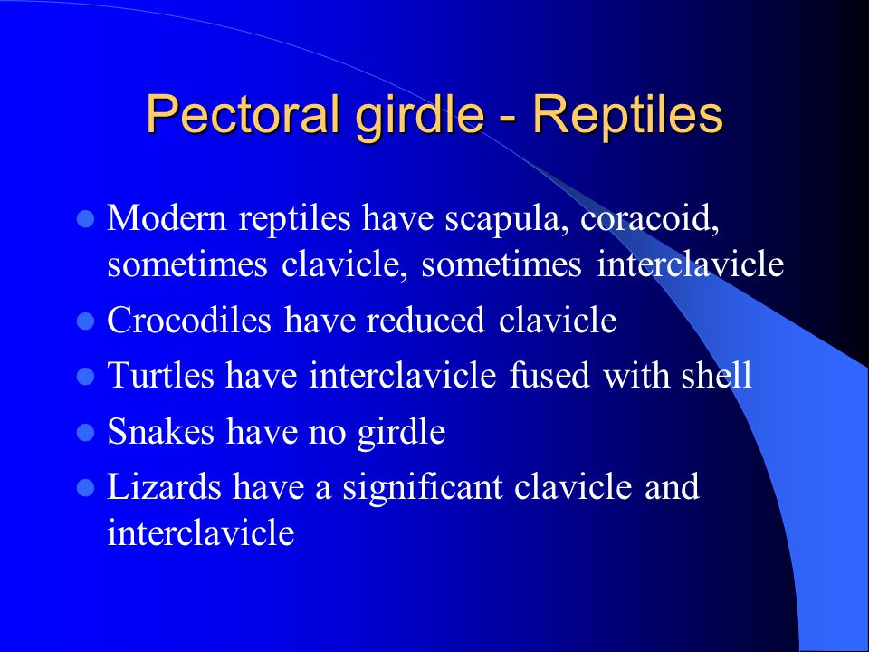 Pectoral girdle - Reptiles