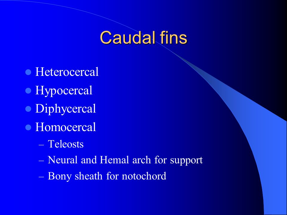 Caudal fins Heterocercal Hypocercal Diphycercal Homocercal Teleosts