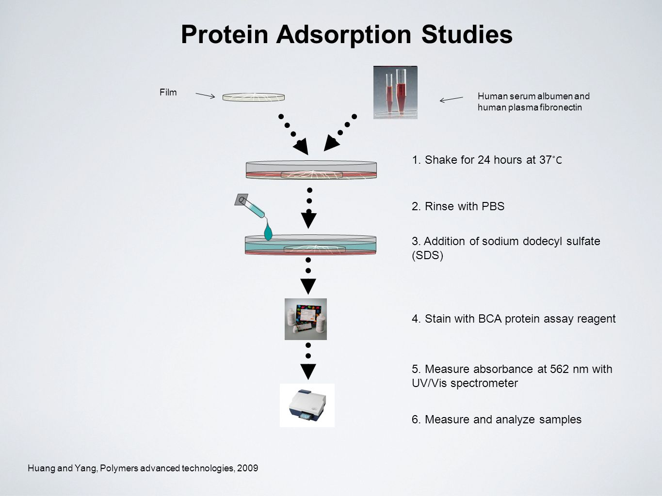 Protein Adsorption Studies