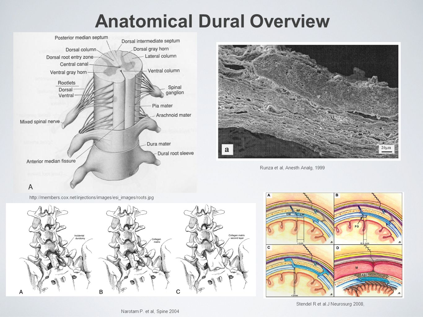 Anatomical Dural Overview