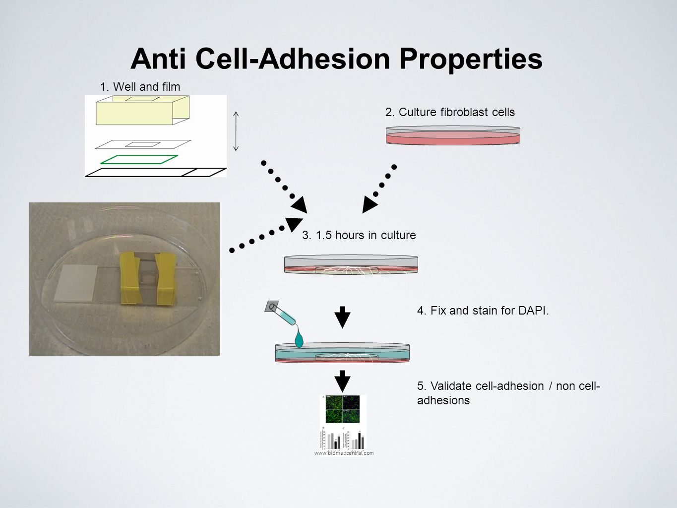 Anti Cell-Adhesion Properties
