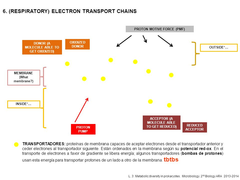 6. (RESPIRATORY) ELECTRON TRANSPORT CHAINS