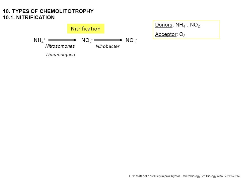 Nitrification NH4+ NO2- NO3- 10. TYPES OF CHEMOLITOTROPHY