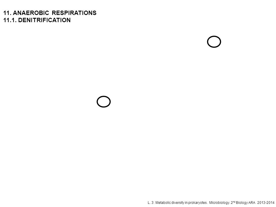 11. ANAEROBIC RESPIRATIONS