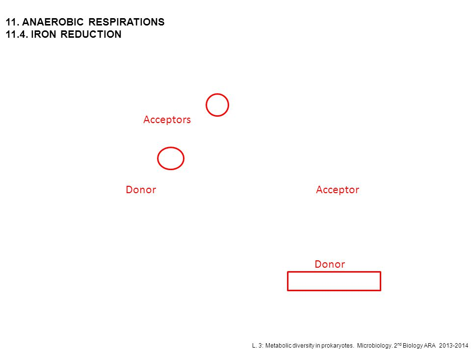 Acceptors Donor Acceptor Donor 11. ANAEROBIC RESPIRATIONS