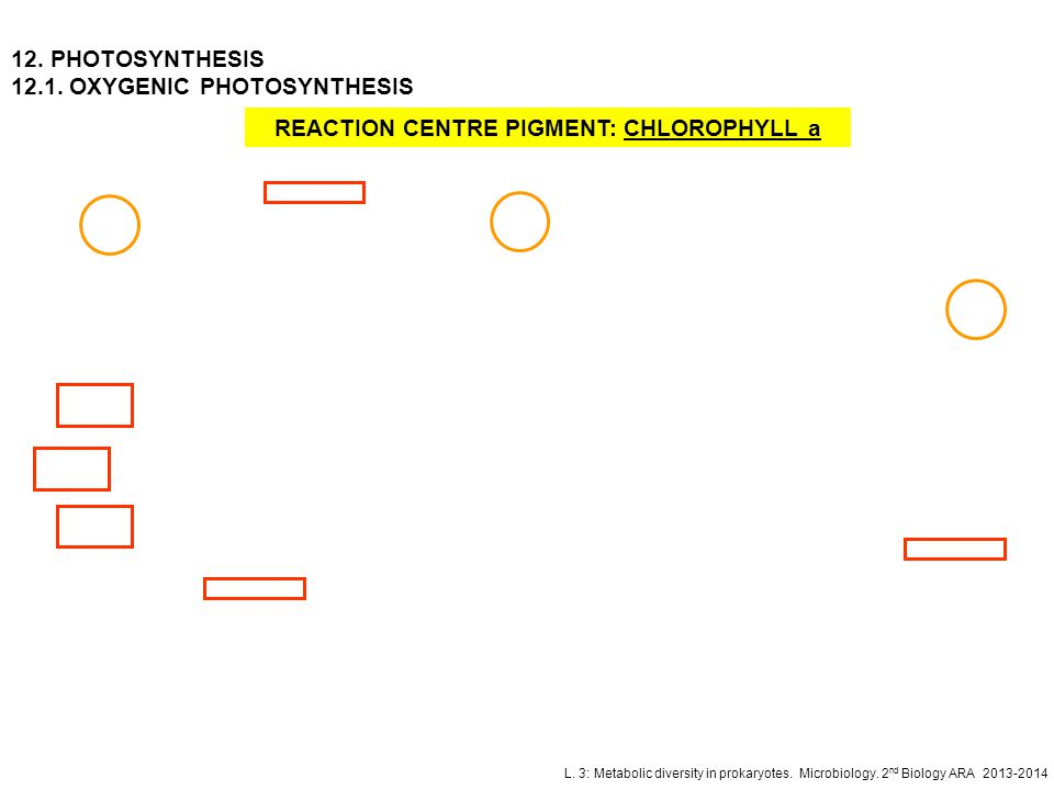 REACTION CENTRE PIGMENT: CHLOROPHYLL a