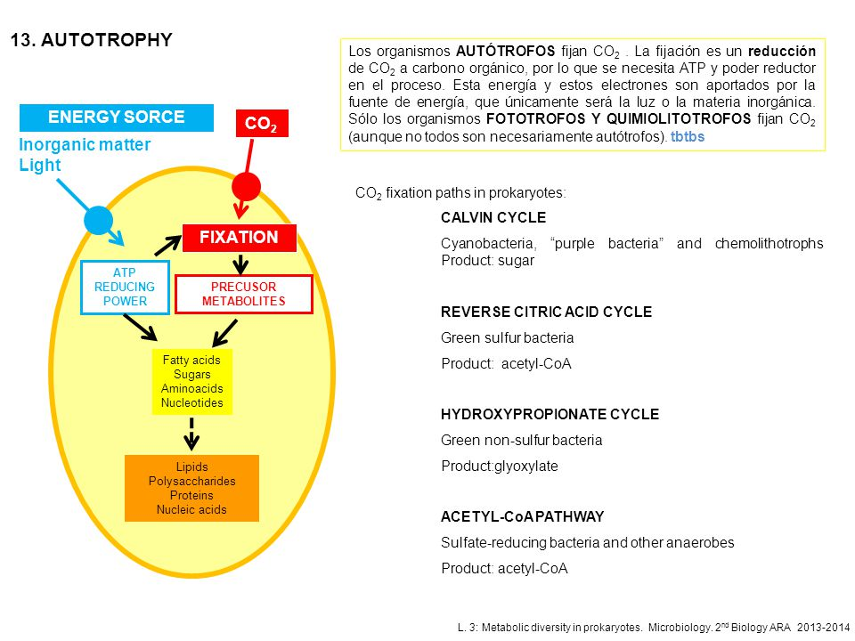 13. AUTOTROPHY ENERGY SORCE CO2 Inorganic matter Light FIXATION