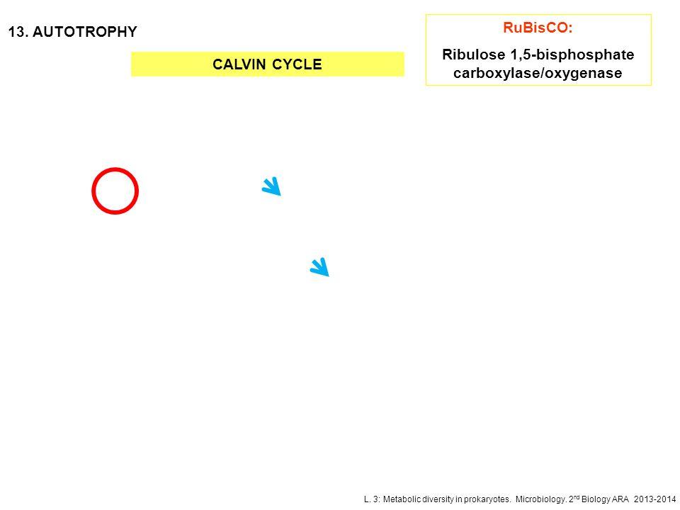 Ribulose 1,5-bisphosphate carboxylase/oxygenase