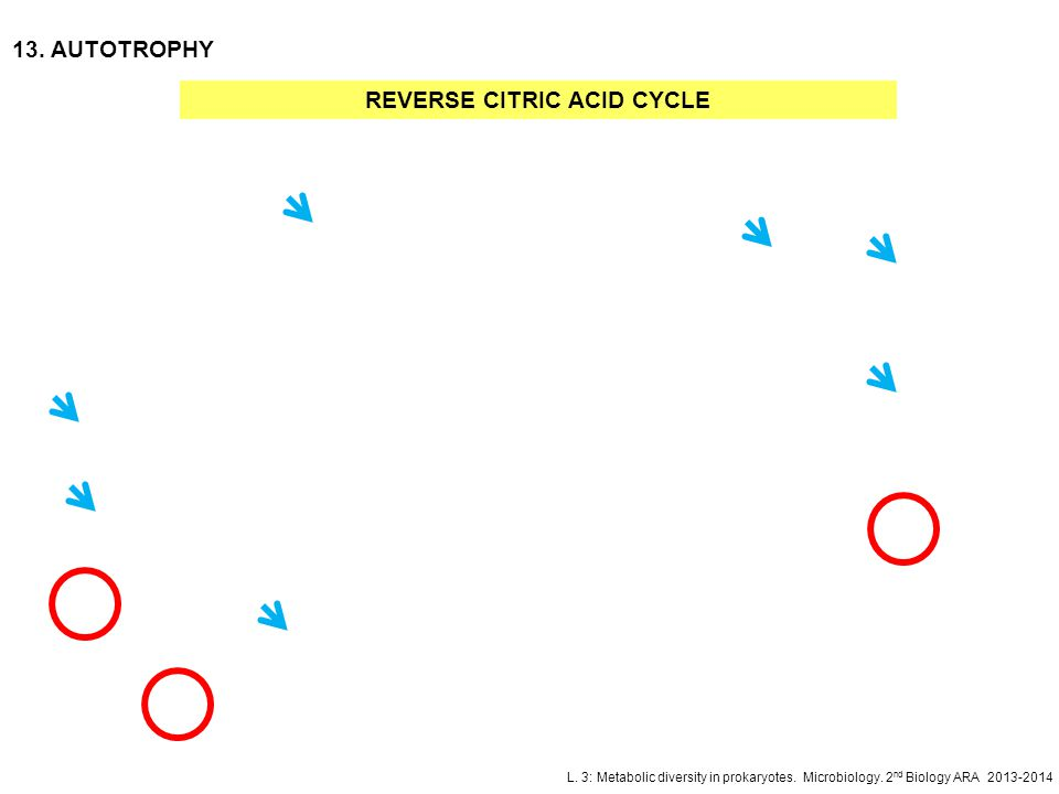 REVERSE CITRIC ACID CYCLE
