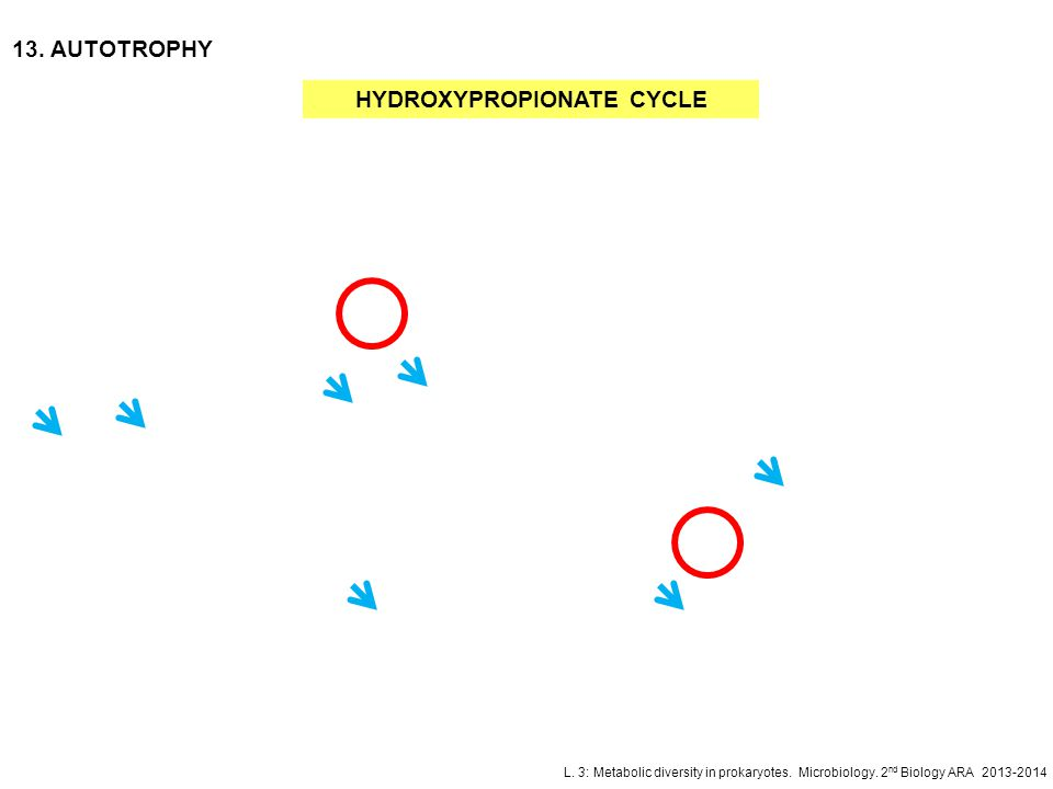 HYDROXYPROPIONATE CYCLE