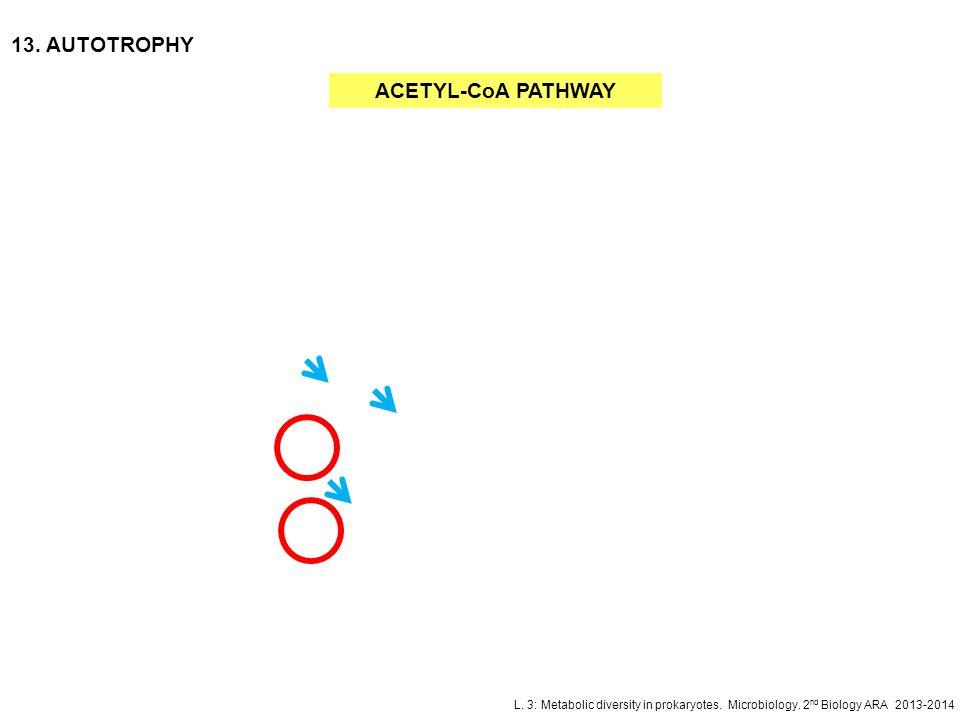 13. AUTOTROPHY ACETYL-CoA PATHWAY