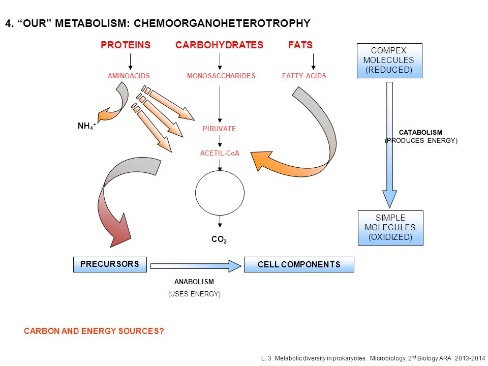 4. OUR METABOLISM: CHEMOORGANOHETEROTROPHY