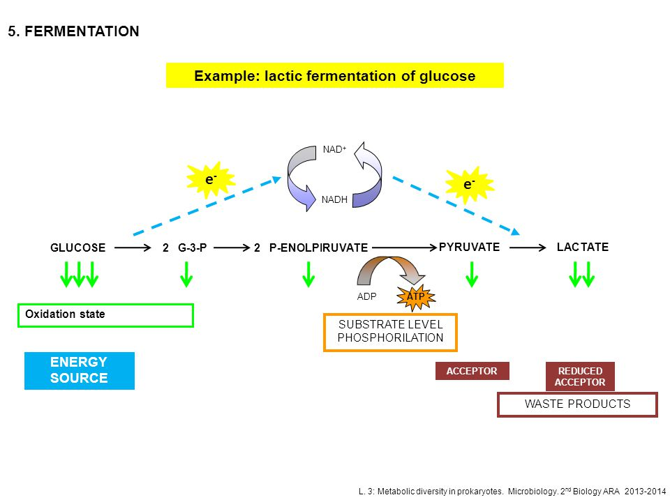 Example: lactic fermentation of glucose
